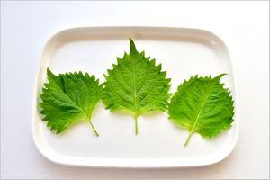 シソの葉の使い方